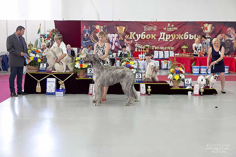 Best Brace - Winners CACIB «Friendship Cup - 2015» + mono-breed shows, Tyumen 4-5 July 2015