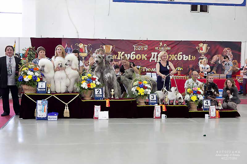 Best Kennel - Winners CACIB «Friendship Cup - 2015» + mono-breed shows, Tyumen 4-5 July 2015