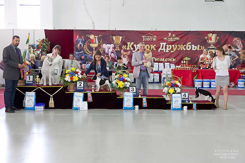 Best Puppy - Winners CACIB «Friendship Cup - 2015» + mono-breed shows, Tyumen 4-5 July 2015