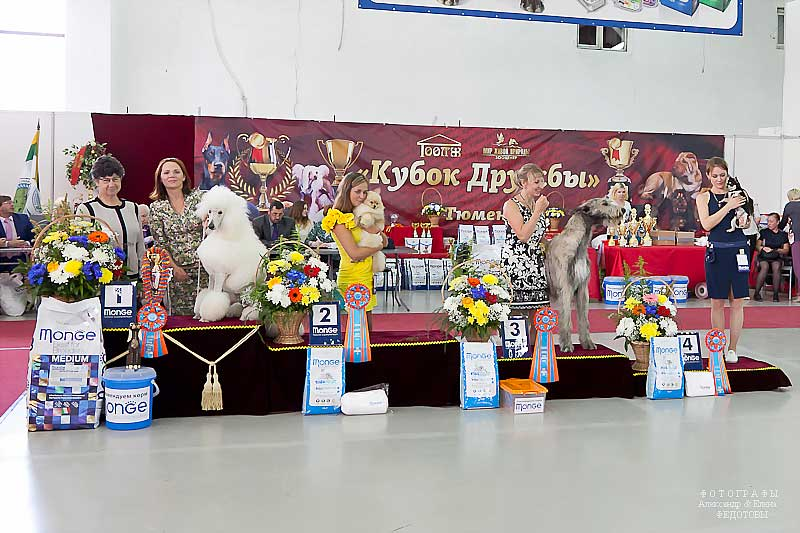 Best Junior - Winners CACIB «Friendship Cup - 2015» + mono-breed shows, Tyumen 4-5 July 2015