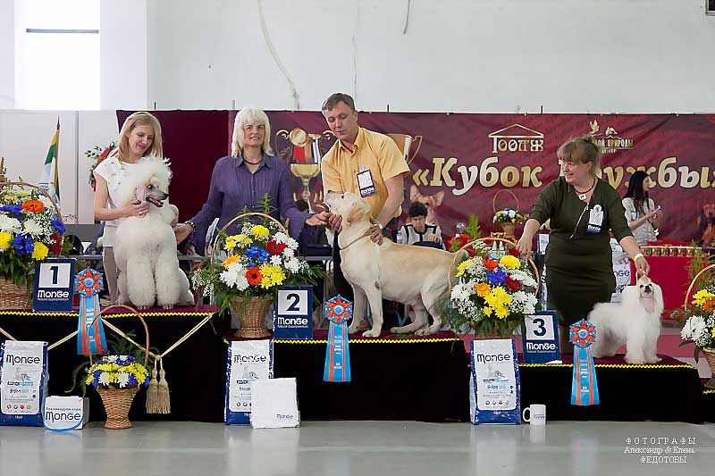 Best Veteran - Winners CACIB «Friendship Cup - 2015» + mono-breed shows, Tyumen 4-5 July 2015