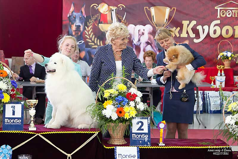 FCI group V - Winners CACIB «Friendship Cup - 2015» + mono-breed shows, Tyumen 4-5 July 2015
