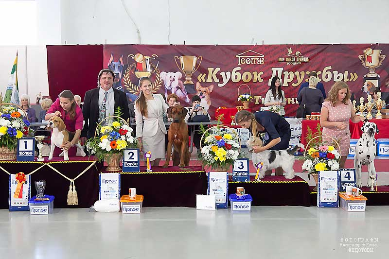 FCI group VI - Winners CACIB «Friendship Cup - 2015» + mono-breed shows, Tyumen 4-5 July 2015