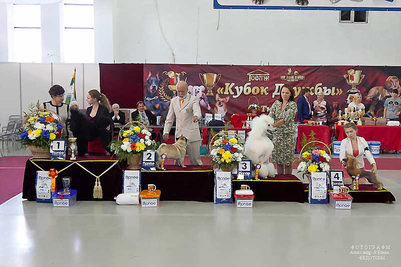 FCI group IX - Winners CACIB «Friendship Cup - 2015» + mono-breed shows, Tyumen 4-5 July 2015